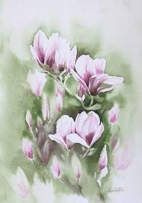 Blüte, Magnolien, Aquarell,