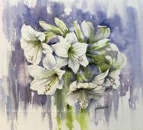 Amaryllis, Weiß, Blumen, Aquarell