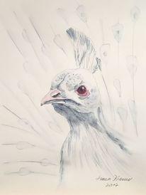 Weisser pfau, Weiß, Vogel, Zeichnungen