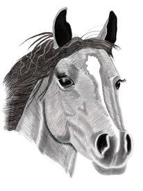 Schwarz weiß, Zeichnung, Digital, Pferde