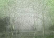 Baum, See, Nebel, Waldsee