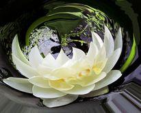 Seerosen, Pflanzen, Digitale kunst