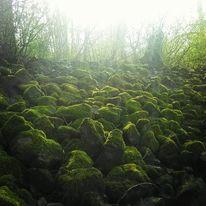 Moos, Stein, Grün, Landschaft