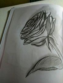 Glas, Bleistiftzeichnung, Rose, Zeichnungen