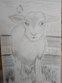 Lamm, Weide, Vogel, Zeichnungen