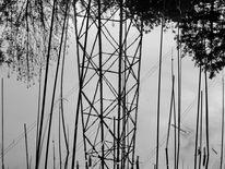 Baum, Strommast, Binsen, Fotografie