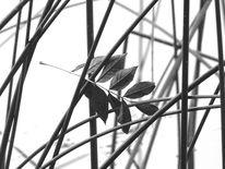 Binsen, Blätter, Wasser, Fotografie