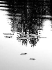 Wasser, Spiegelung, Seerosen, Fotografie