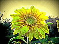 Sonnenblumen, Outsider art, Fotografie, Konzept