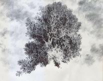 Baum, Romantik, Laubbaum, Landschaft
