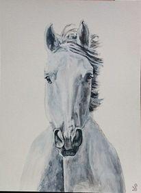 Portrait, Pferde, Schimmel, Malerei