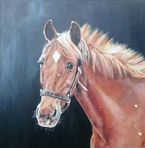 Portrait, Pferde, Fuchs, Malerei