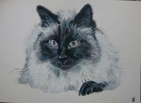 Kater, Katze, Perser, Malerei