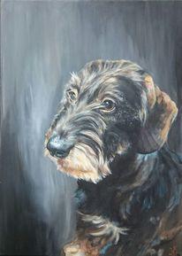 Hund, Portrait, Dackel, Rauhaardackel