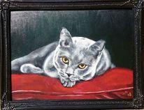 Katze, Kater, Britisch kurzhaar, Malerei