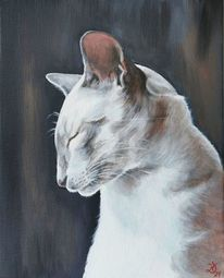 Katze, Kater, Siamkatze, Malerei