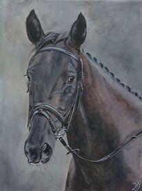 Pferde, Portrait, Turnierpferd, Malerei