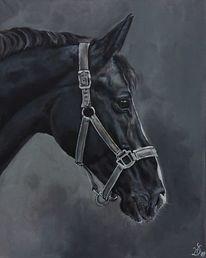 Pferdeportrait, Stute, Pferde, Halfter
