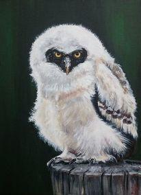 Eule, Vogel, Brillenkauz, Malerei