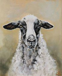 Schaf, Schafbild, Bauernhoftiere, Spiegelschaf