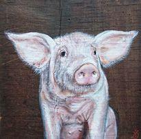 Schwein, Ferkel, Sau, Bauernhof