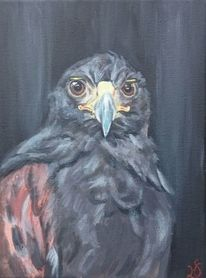 Portrait, Vogel, Greifvogel, Schnabel