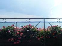 Wasser, Horizont, Blumen, Rosa