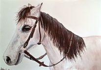 Pferde, Weiß, Apollo, Zeichnungen
