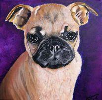 Hund, Mops, Malerei, Tiere
