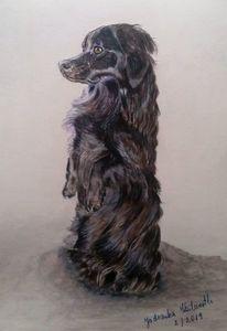 Hund, Schwarz, Tusche, Zeichnungen