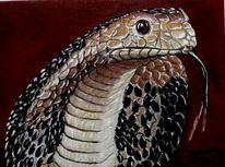 Schlange, Malerei, Tiere,