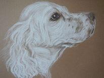 Tierzeichnung, Pastellmalerei, Hund, Zeichnungen