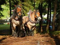 Kaltblut, Pferde, Fotografie