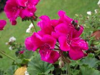 Blumen, Insekten, Fotografie, Tiere