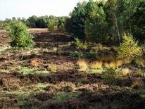 Moor, Naturschutzgebiet, Gildehauser, Fotografie