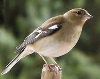 Vogel, Tiere, Fotografie
