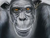 Wald, Schimpanse, Tiere, Chimp