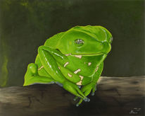 Makifrosch, Frosch, Amphibien, Wasser