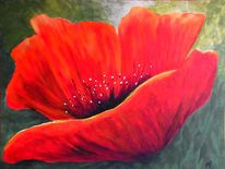 Roter mohn, Blüte, Pollen, Pflanzen