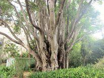 Baum, Hongkong, Stärke, Kraft