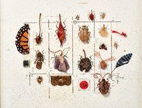 Müll, Insekten, Spiegelscherbe, Pflanzen