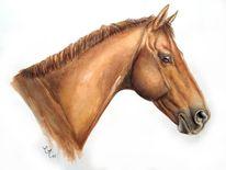 Tierportrait, Pferde, Portrait, Aquarellmalerei
