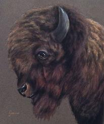 Oklahoma, Gemälde, Büffel, Pastellmalerei