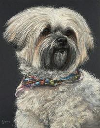 Pastellmalerei, Portrait, Hund, Tiere