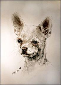 Sepia, Fellnase, Portrait, Hund