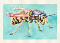 Wespe, Aquarellmalerei, Tiere, Aquarell