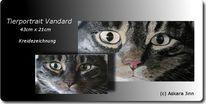 Mietze, Katze, Vandard, Portrait