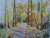 Waldweg, Baum, Licht, Wald
