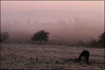 Landschaft, Raureif, Violett, Kalt
