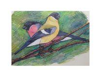 Tiere, Vogel, Singvogel, Zeichnungen